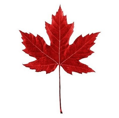 Blog Image for Happy Holiday it is Canadian Thanksgiving!
