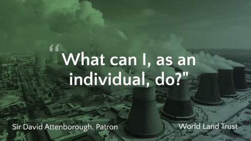 Blog Image for What can I, as an individual, do?