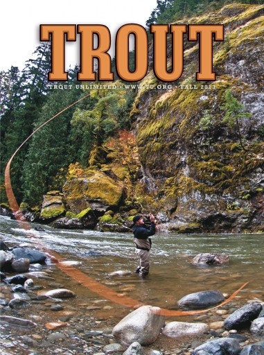 Media Scan for Trout