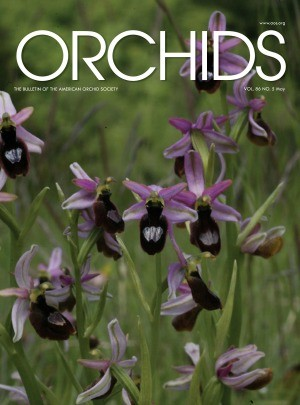 Media Scan for Orchids