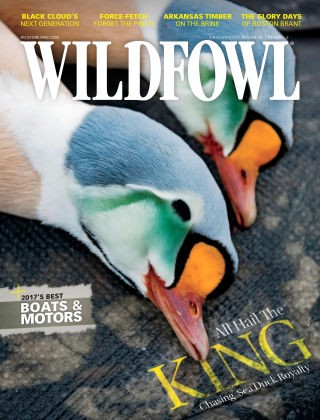 Media Scan for Wild Fowl